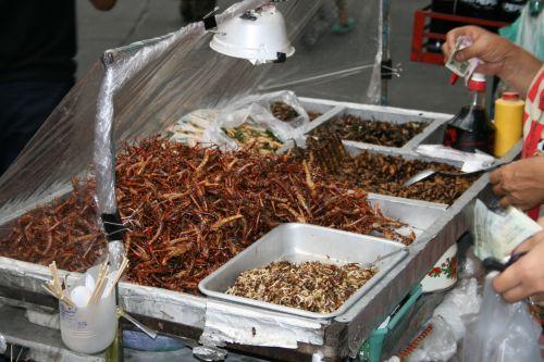 Thailand crickets food