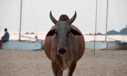 Top 5 Weird Beaches in India